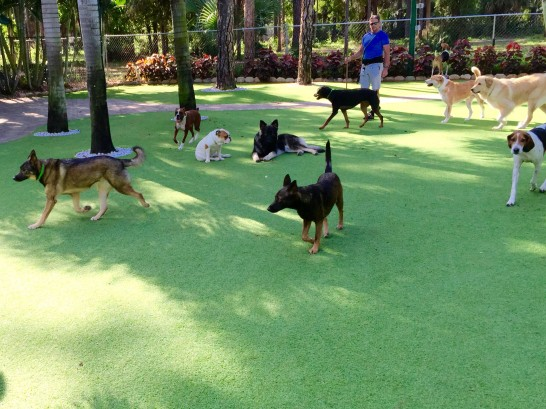 Artificial Grass Photos: Lawn Services West Dundee, Illinois Cat Playground, Grass for Dogs