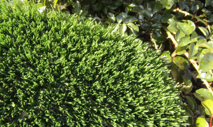 Hollow Blade-73 syntheticgrass Artificial Grass Chicago Illinois