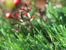 Good Deals On Artificial Grass