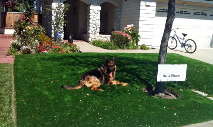Pet Grass, Artificial Grass For Dogs in Chicago